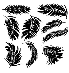 Palm leaves silhouette vector