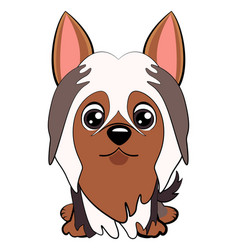 dog silky cartoon vector image