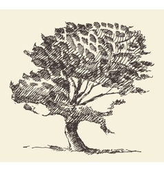 Old tree vintage hand drawn sketch vector image vector image