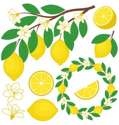 Lemon Set vector image