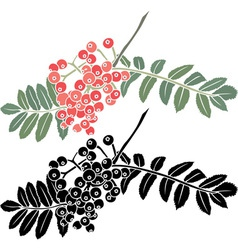 Rowan berry branch stencil vector