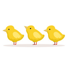 three cute chickens standing one after another vector image