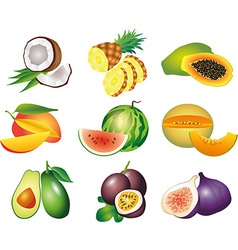 Fruits exotic set vector