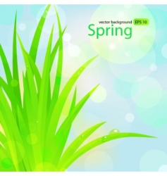 Spring grass with water drops vector