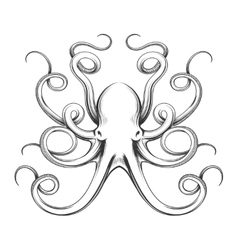 Engraved octopus icon vector
