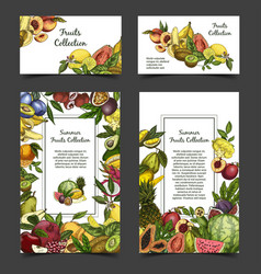 banner or brochure with exotic tropical fruits vector image