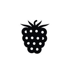 isolated blackberry icon freshness element vector image