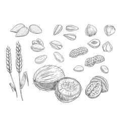 Nuts grain pencil sketch icons vector