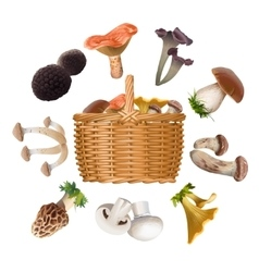 Collection of various species edible mushrooms and vector