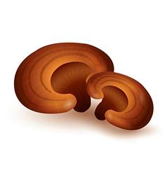 Lingzhi Mushroom vector image