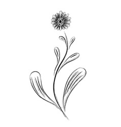 Simple flower isolated on the white vector