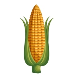 Fresh corn vegetable isolated icon vector