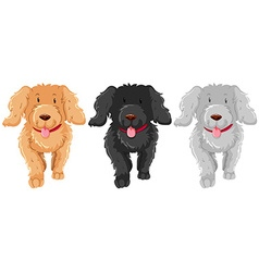 Three poodle dog with happy face vector
