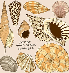 Set of isolated seashell icons vector