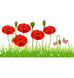 Fresh poppy lawn with green grass vector