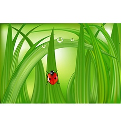 Ladybug On Green Grass vector image