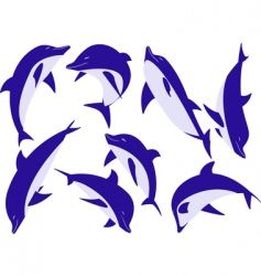 animal dolphins vector image vector image