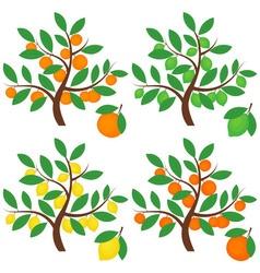 Citrus Trees vector image