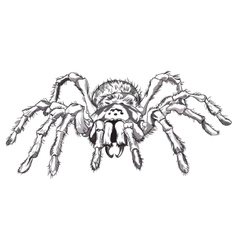 Black spider animal vector