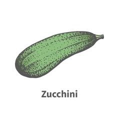 hand-drawn green mature big zucchini vector image vector image