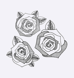 Roses hand drawing set vector