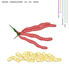 Kidney bean pods with vitamin b9 and b5 vector