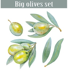 Set of olives vector
