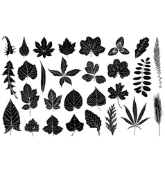 different leaves vector image