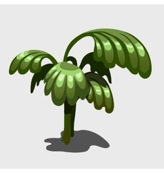 Green exotic plant with large leaves image vector
