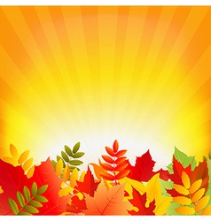 Autumn background with sunburst vector