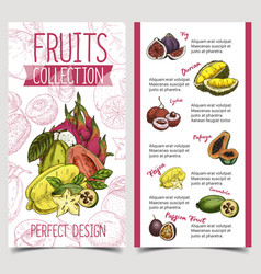 Banner with tropical and exotic summer fruits vector