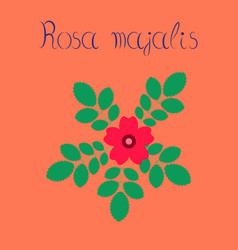 Flat on background rosa majalis vector