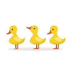 Three cute cartoon ducklings characters standing vector