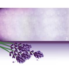 Lavender springs bouquet vector