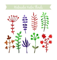 Set of watercolor flowers vector image vector image