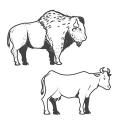 Cow and buffalo icons isolated on white vector