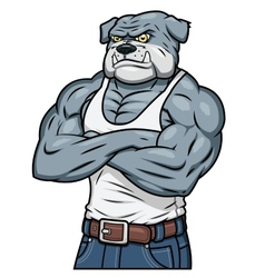 Strong muscle aggressive bulldog vector