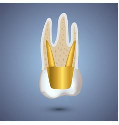 Realistic teeth anatomy vector