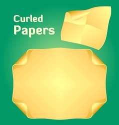 curled papers vector image