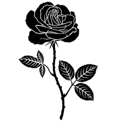 rose leaves vector image
