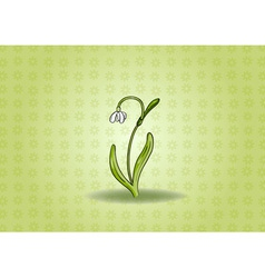 snowdrop on the green background vector image