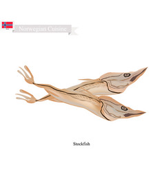 stockfish or fish unsalted a popular food in norw vector image