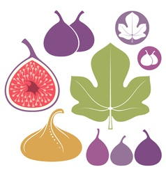 Fig set vector