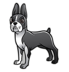 Cute boston terrier dog vector
