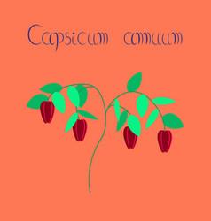 Flat on background plant capsicum vector