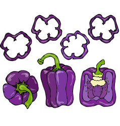 Purple bell peper set half of violet sweet vector