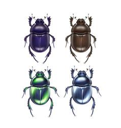 set of scarab beetles vector image