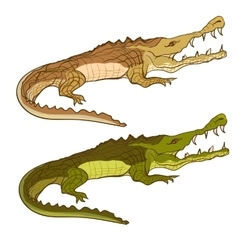 Crocodile green and brown cartoon image vector