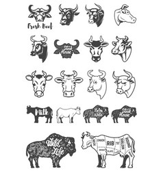 Big set of cow heads and silhouettes design vector
