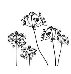 Fennel flower 1 vector